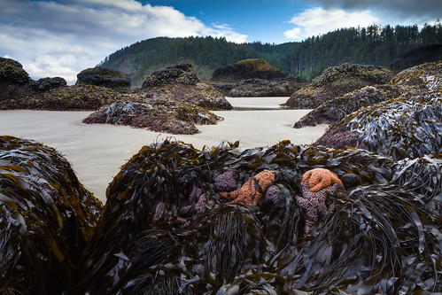 Indian Beach @ Ecola State Park - Cannon Beach, Oregon (explored) | by The Flannel Photographer