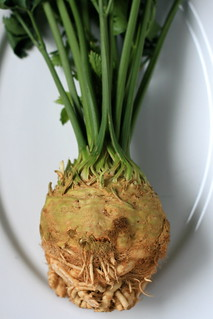 Celery Root | by Steven Jackson Photography