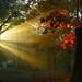 Dan Medalie_Shaker Dawn_Southerly Park Landscape