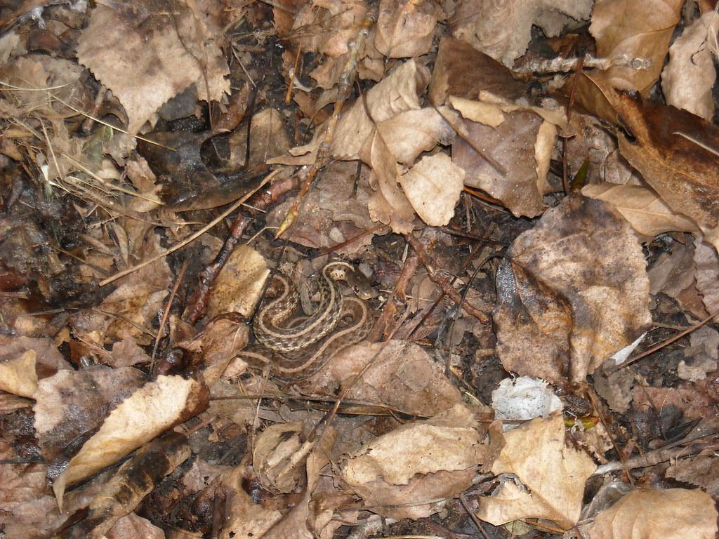 Snakes On A Plane Anaconda Eats Dog And Guman