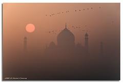 Misty Taj