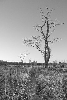 Wold Road Prairie | by DMD1978