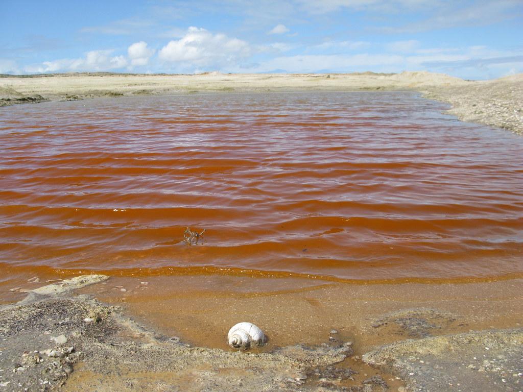 Dunaliella Salina La Microalga Laguna Salada Reserva De