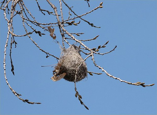 hanging nest | hanging bird nest in tree with a bright ...
