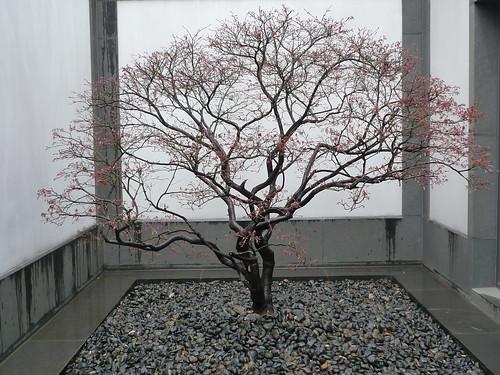 Architektur und natur in perfekter harmonie suzhou museum for Architektur und natur
