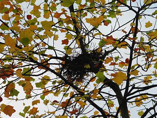 Nid dans un arbre en automne