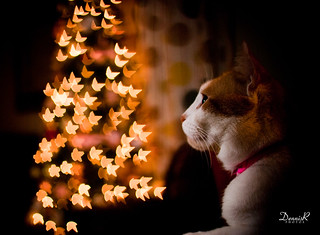 My Cat's Starry Christmas | by Dennis_Ramos