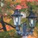 Autumn lanterns :)