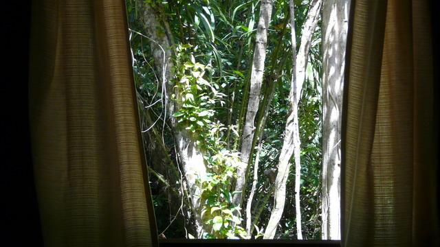 Jungle Curtains Khaosok Thailand