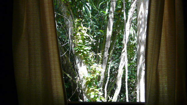 Jungle Curtains, Khaosok, Thailand | From Your Room, Look Atu2026 | Flickr