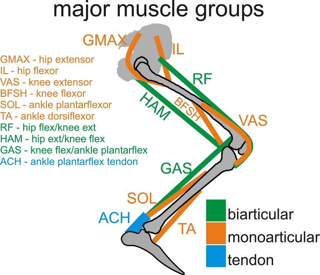 Yahoo Muscle Groups 121