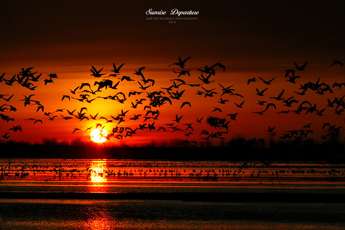 Flying Silhouettes! | by Imapix