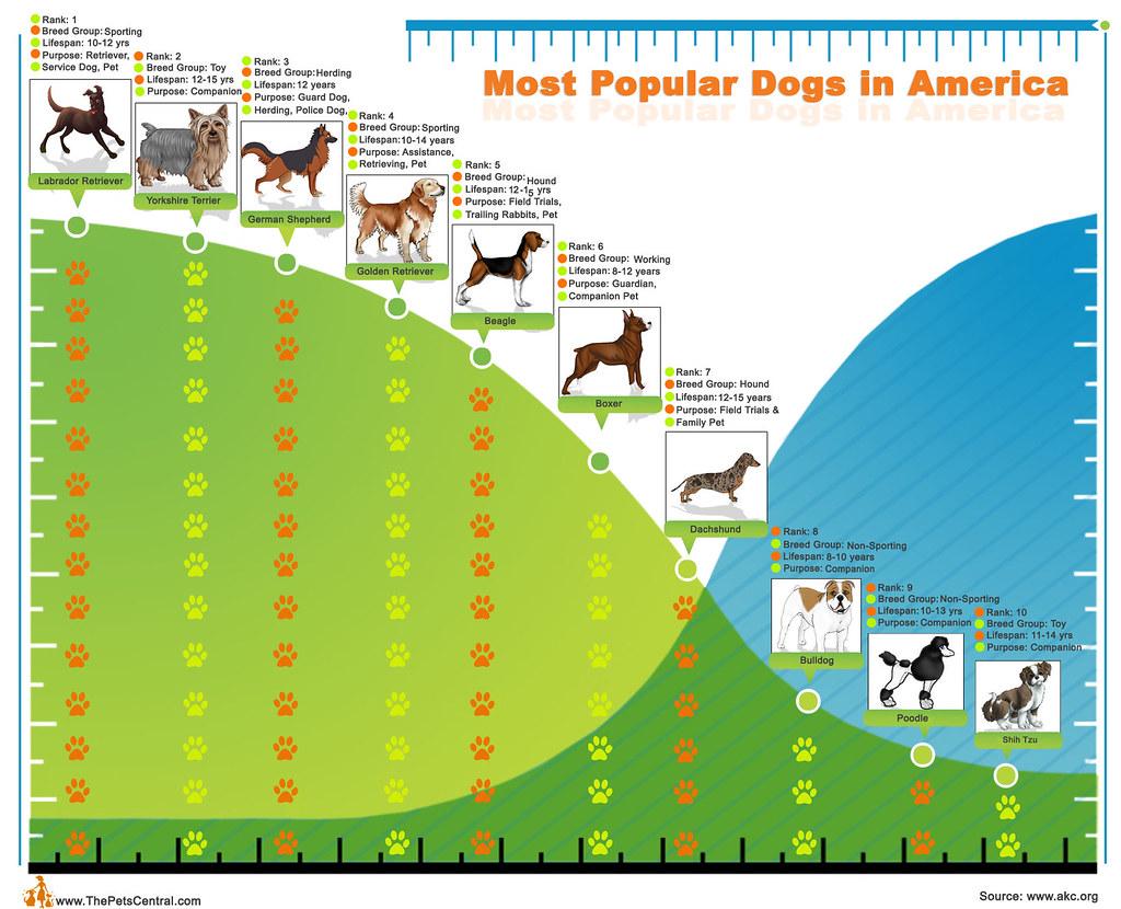 Most Popular Akc Registered Dog Breed