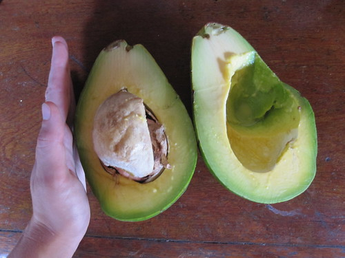 Giant Avocado | by veganbackpacker