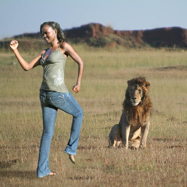 Image result for face to face with a lion