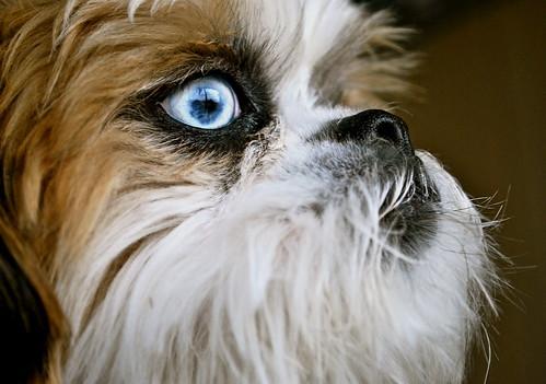 """""""Blue Eye Boy&quo..."""