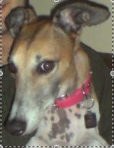 Toronto Dog Rescue Adoption