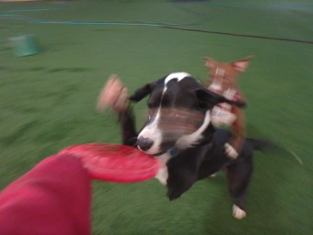 02/18/17 Frisbee Catch! :D