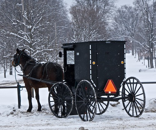 Amish Buggy 1 | by Don Iannone