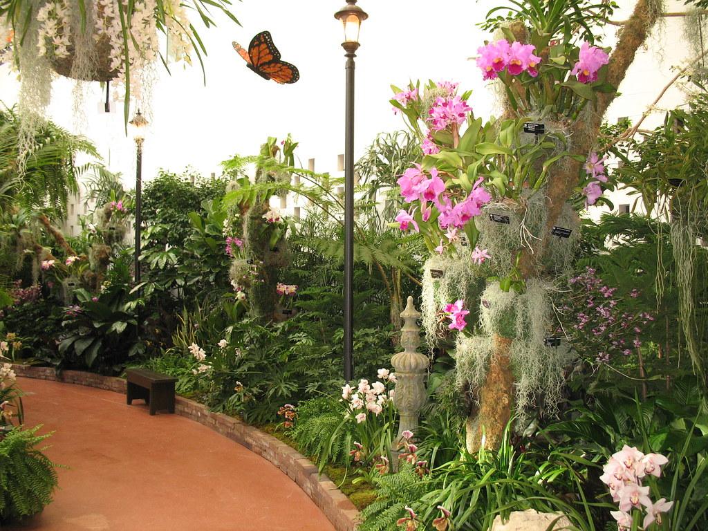 Orchid show 2010 missouri botanical garden flickr - Orchid show missouri botanical garden ...