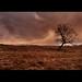 Tree Fields Cae Gwyn
