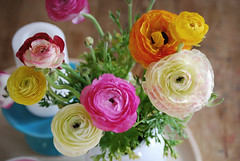 i am so not above getting on the ranunculus band wagon. | by tara shannon :: tasphotos