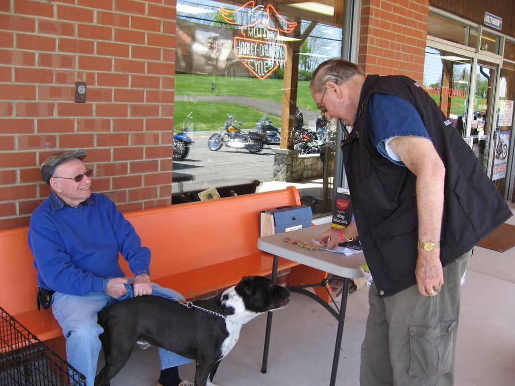 Harley Davidson Pet Clothing Dogs