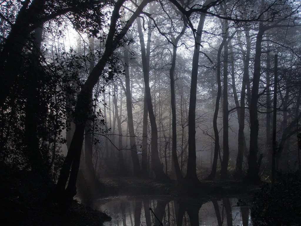 Spooky Forest In The Morning A Misty Morning When I Was