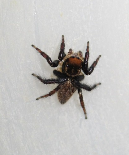 how to get rid of common house spiders