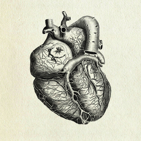 Vintage Anatomical Drawing Heart anatomy |...