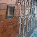 Group of hanging ropes each with a noose at the end