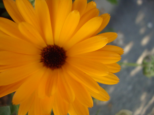 Forgiveness lesson from flowers | by juliejordanscott