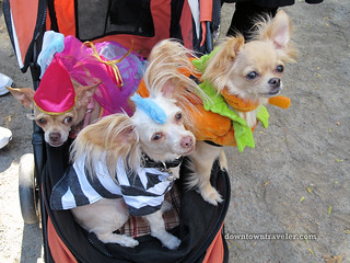 NYC Tompkins Square Halloween Dog Parade 2010 | by Downtown Traveler