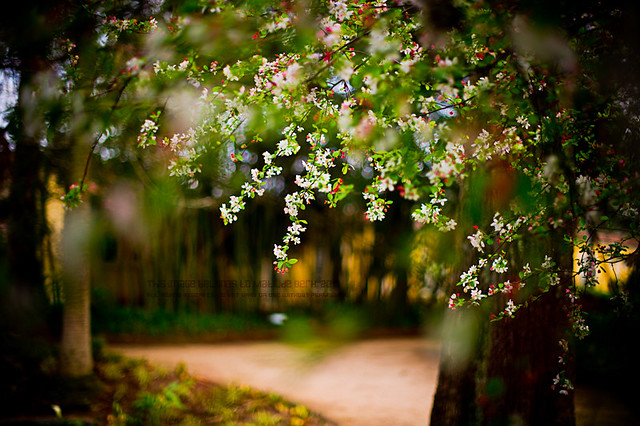407 | good morning, spring lovers! | I love when fruit