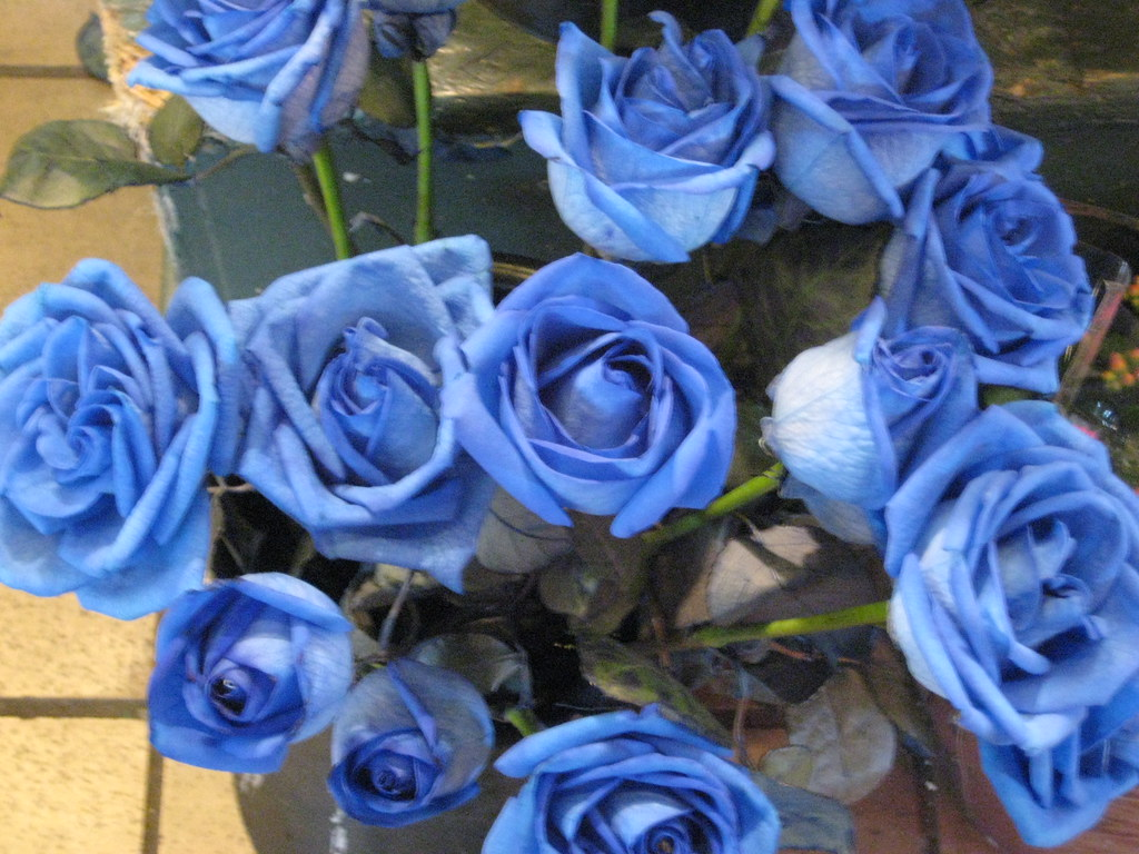 real blue roses not sure how they got blue kgroovy