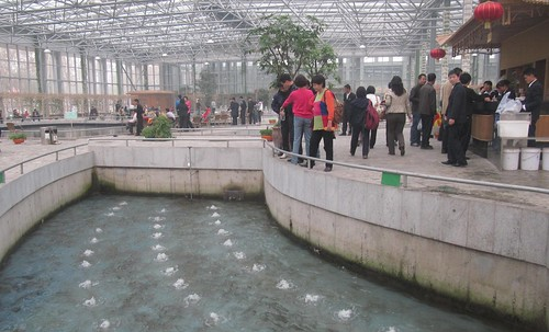 Indoor fish farm china these were taken outside beijing for Indoor fish farming