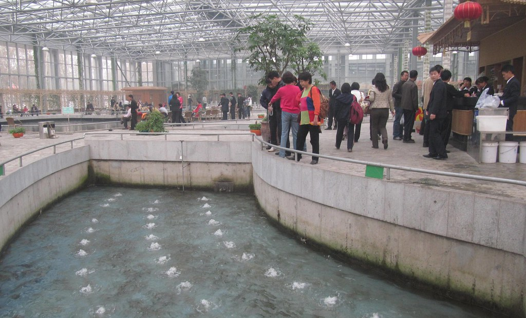 Indoor fish farm china these were taken outside beijing for Fish farm 3