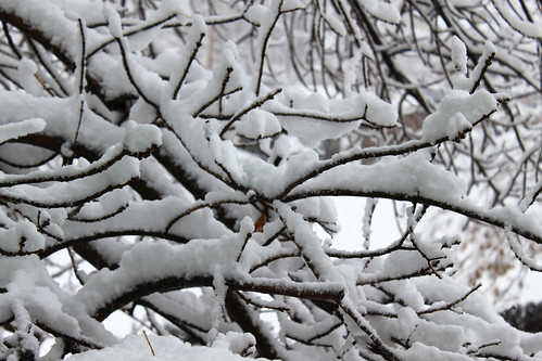 Snowy Limbs | by Toria Clark