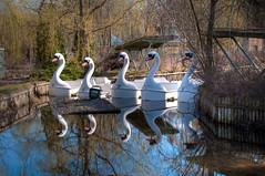 Spreepark: Swans