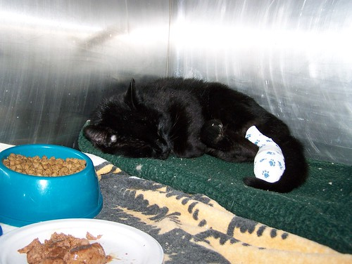 Rocky Mountain Cat Rescue
