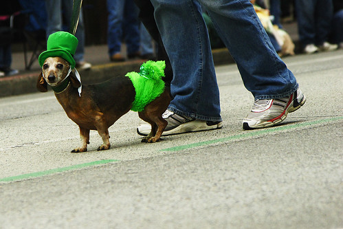 Irish wiener | by zenobia_joy