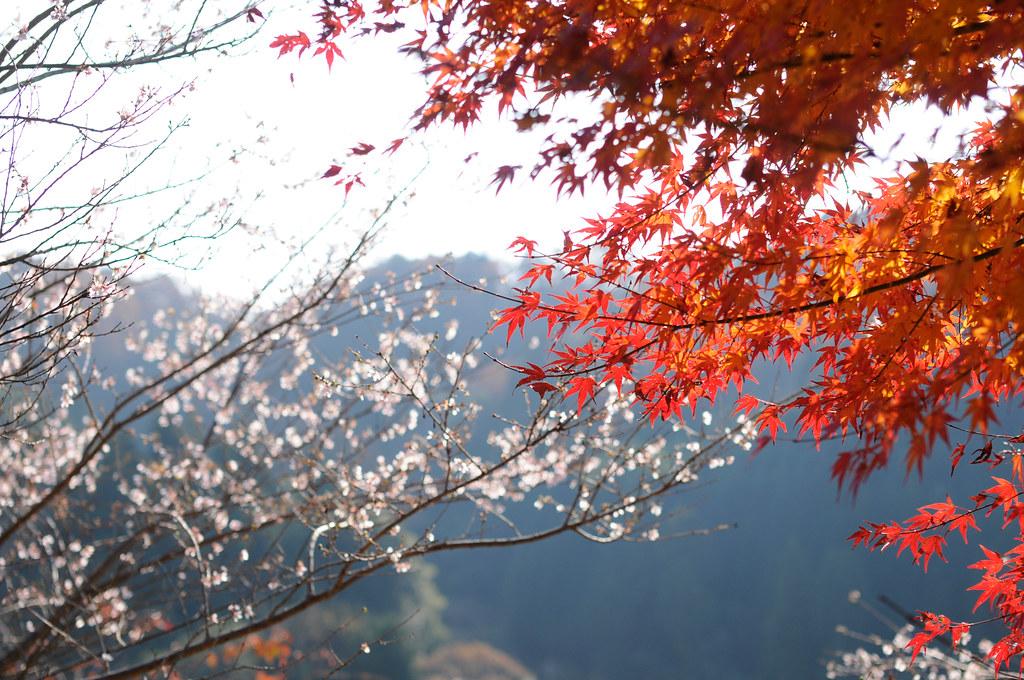 Lịch trình du lịch nhật bản tháng 11