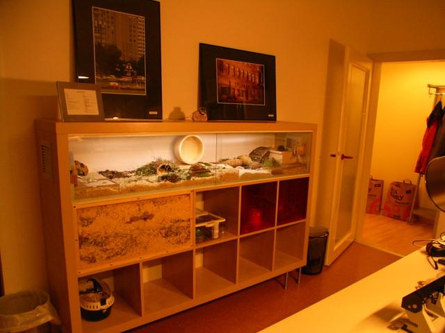 Hamster cage based on ikea expedit hamstergehege aus ike for 5x5 frames ikea