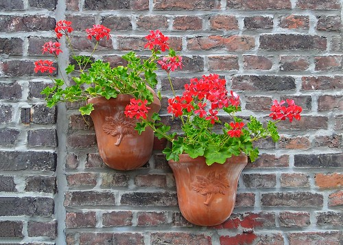 Potted flowers on the wall | by fmpgoh