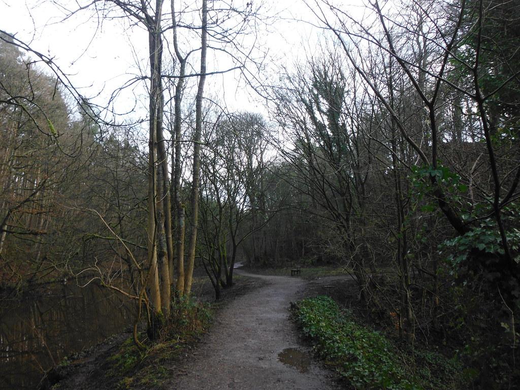 Skipton Wood 22