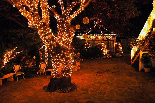 Secret Garden At Night With The Dancing Tree And Chairs W
