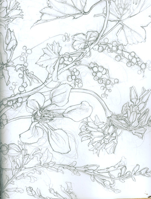 Contour Line Drawing Flowers : Flower drawing a very beautiful contour by sarah