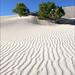 20091104   Death Valley National Park, California 004