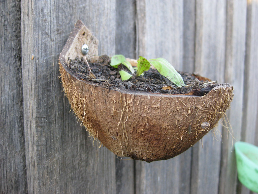Coconut Shell Plant Pot This Photo Was Published On