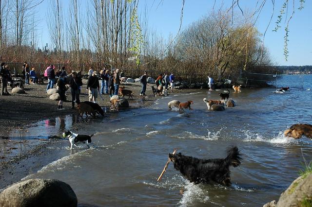 Magnuson Dog Park Parvo